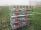 雞鴿兔籠 養殖設備 養殖籠具 鴿子籠 兔子籠 雞籠 寵物籠
